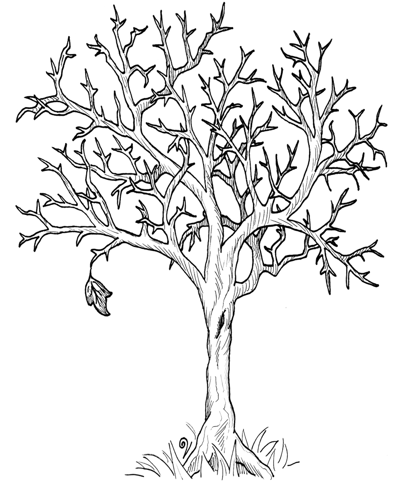800x988 Dead Tree Coloring Page Kids Drawing And Pages Marisa Striking
