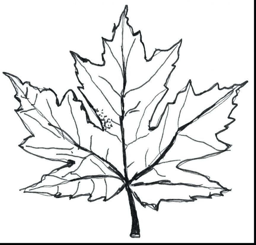 863x826 Download Tree Coloring Pages Maple Leaves Of Pumpkin Fall