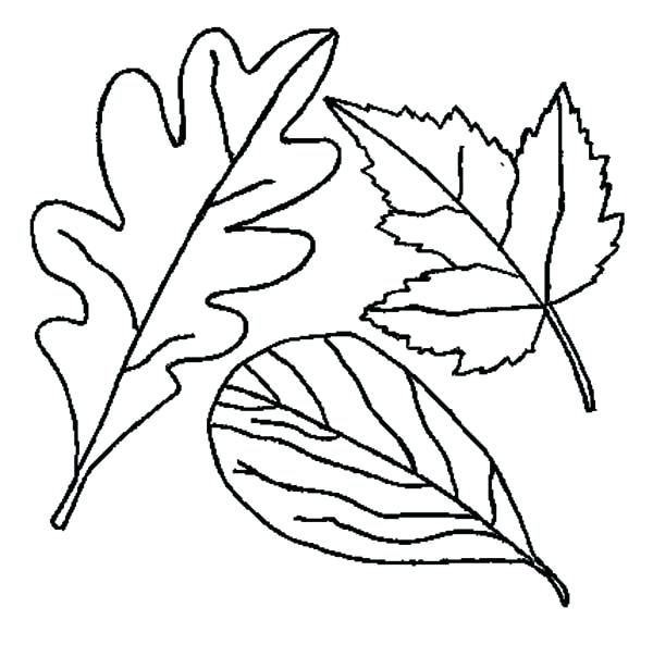600x593 Fall Leaves Coloring Pages For Preschoolers Drawing Of Leaf Page