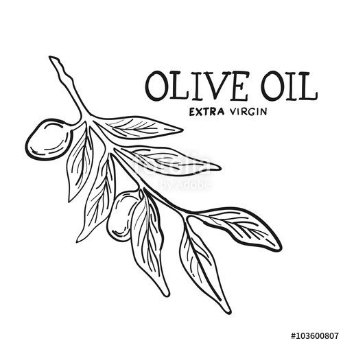 500x500 Hand Drawn Sketch Of Olive Tree Brunch With Leaves And Olives