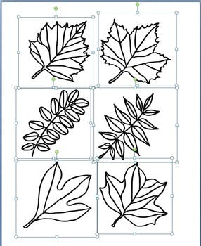 286x350 Leaf Clipart Types Of Tree Leaves Line Drawings By Not Your