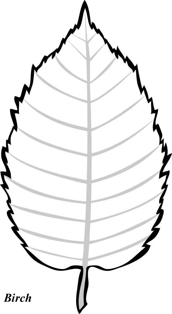 549x999 Leaf Clipart