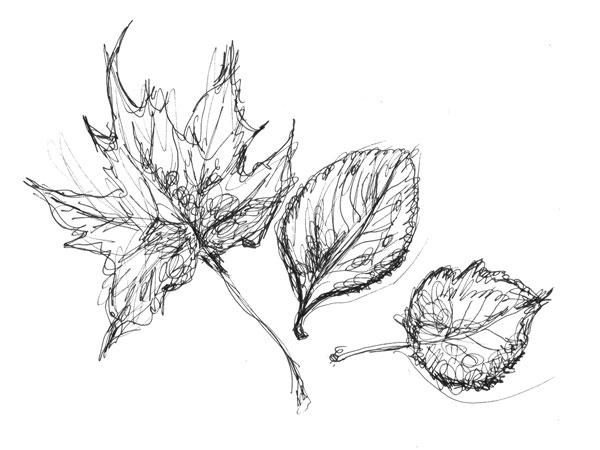 Tree Leaves Drawing at GetDrawings | Free download