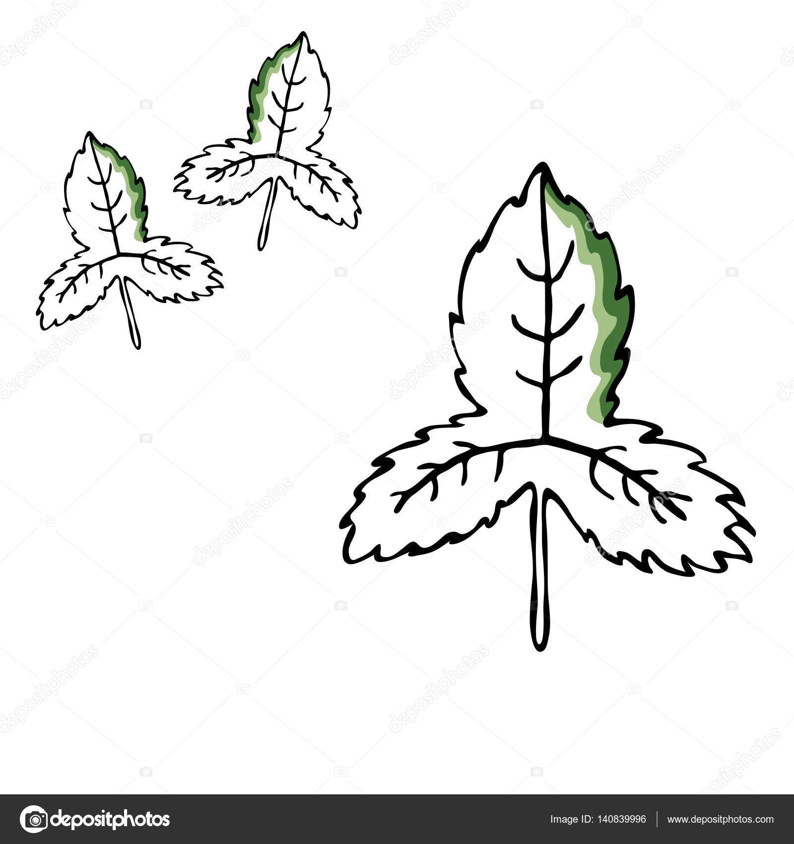 1600x1700 Leaf Vector Drawing Set. Isolated Tree Leaves. Herbal Engraved