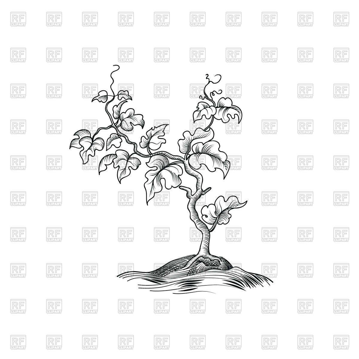 1200x1200 Plant With Leaves Sketch
