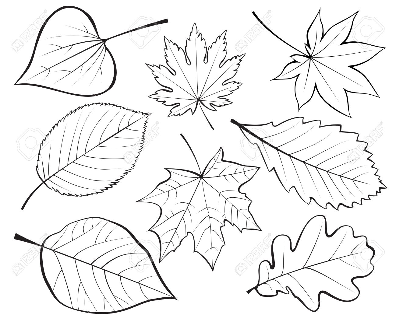 1300x1058 Leaves Drawing