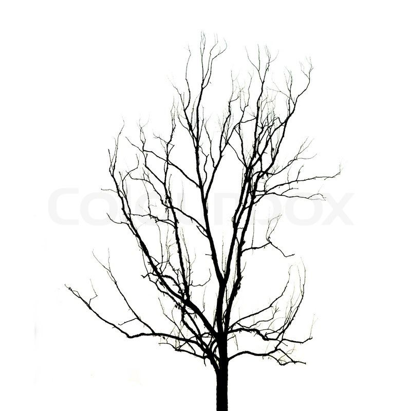 800x800 Tree Without Leaves Silhouette Collection