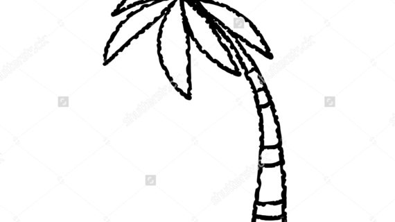 570x320 Palm Tree Line Drawing How To Draw Realistic Palm Trees