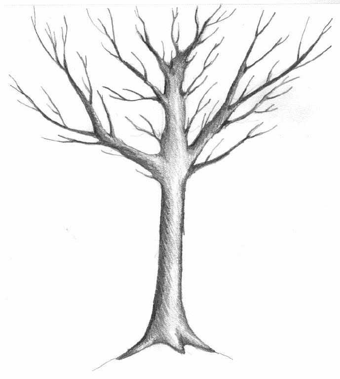 689x768 drawn branch winter tree