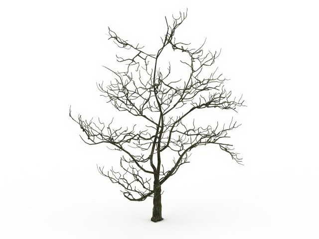 Tree No Leaves Drawing at GetDrawings com | Free for
