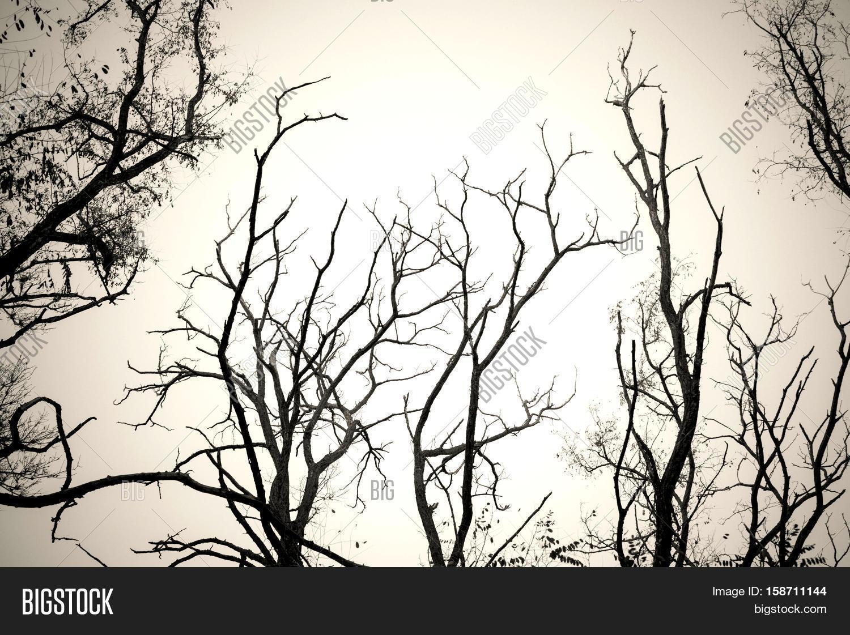 1500x1121 Tree Branches No Leaves Black White Image Amp Photo Bigstock