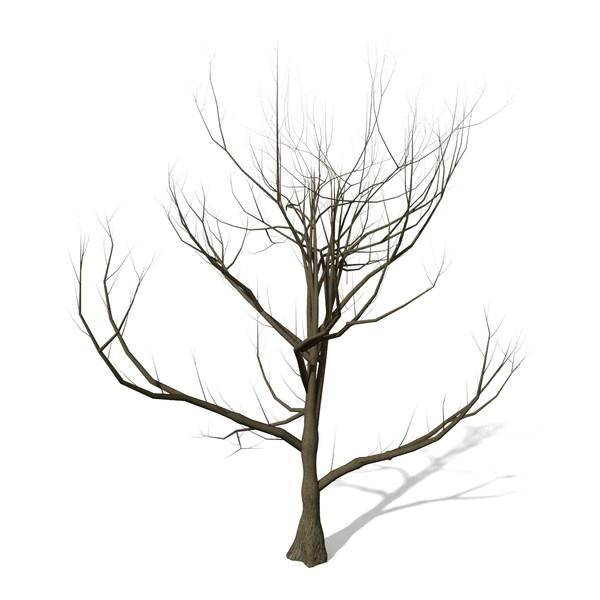600x600 Tree Without Leaves Clipart