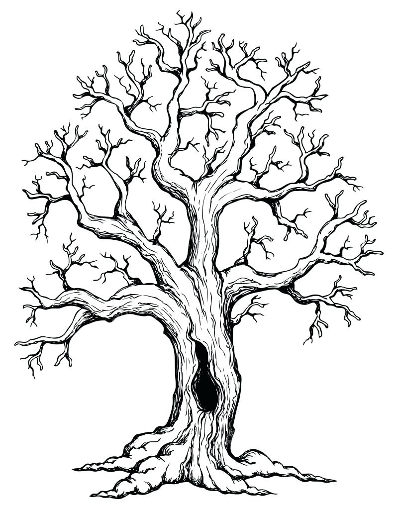 Tree No Leaves Drawing At Getdrawings Com Free For