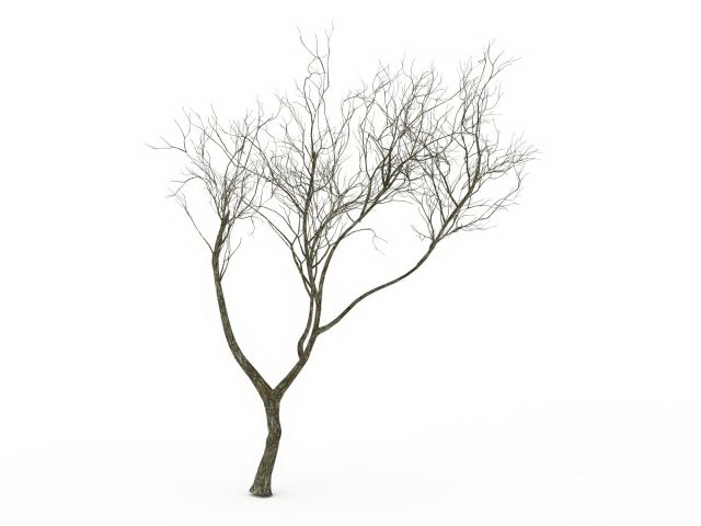640x480 Bare Tree 3d Model 3ds Max Files Free Download
