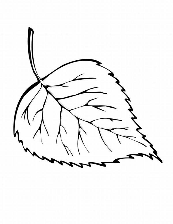 600x776 Birch Leaf Coloring Page Maple