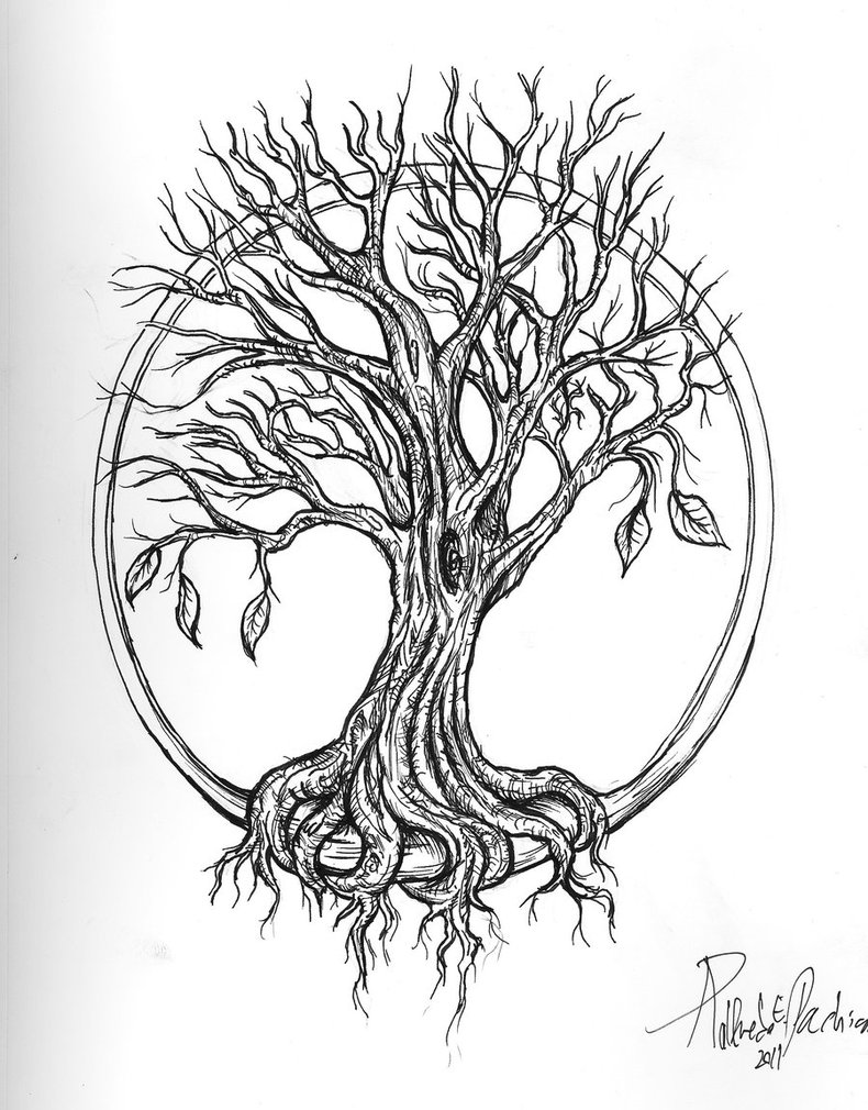 Tree Of Life Line Drawing At Getdrawings Com Free For Personal Use