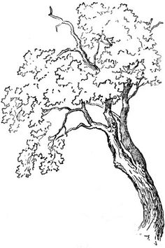 236x354 Draw A Tree On The Hallway Wall On Large Scale And Post Family