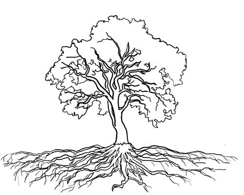 Tree Outline Drawing at GetDrawingscom Free for personal use Tree