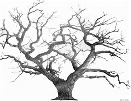 Tree Pencil Drawing