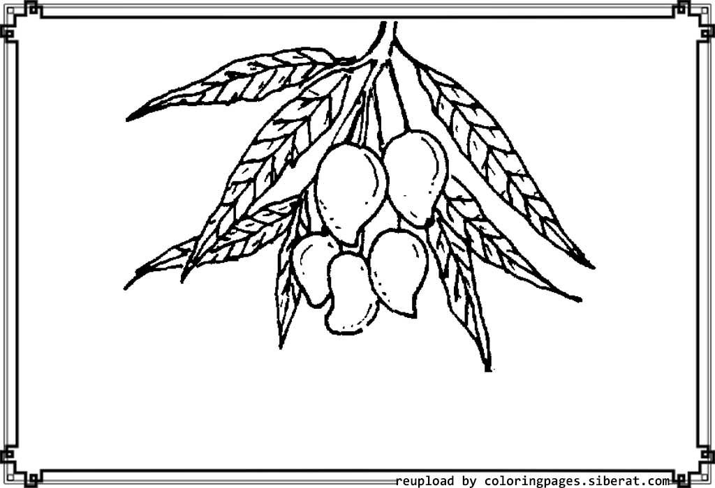 1024x700 mango tree pencil sketch