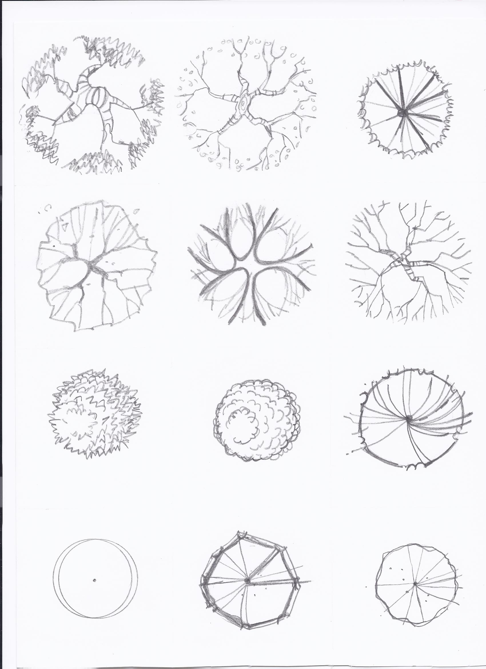 1700x2338 Drawings Exercises How To Draw A Tree