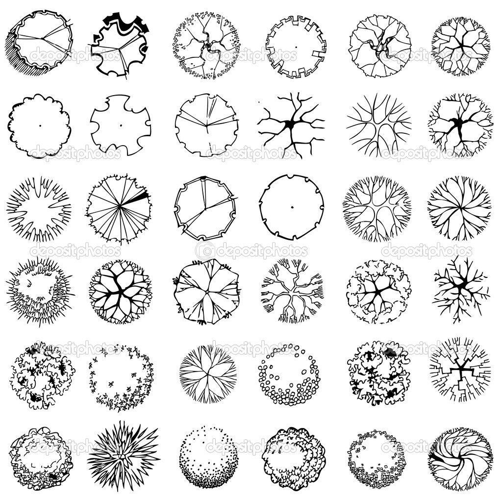 1024x1024 Palm Tree Plan Graphic