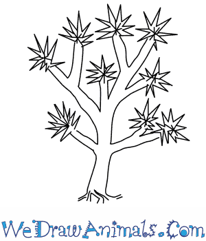 300x350 How To Draw A Joshua Tree