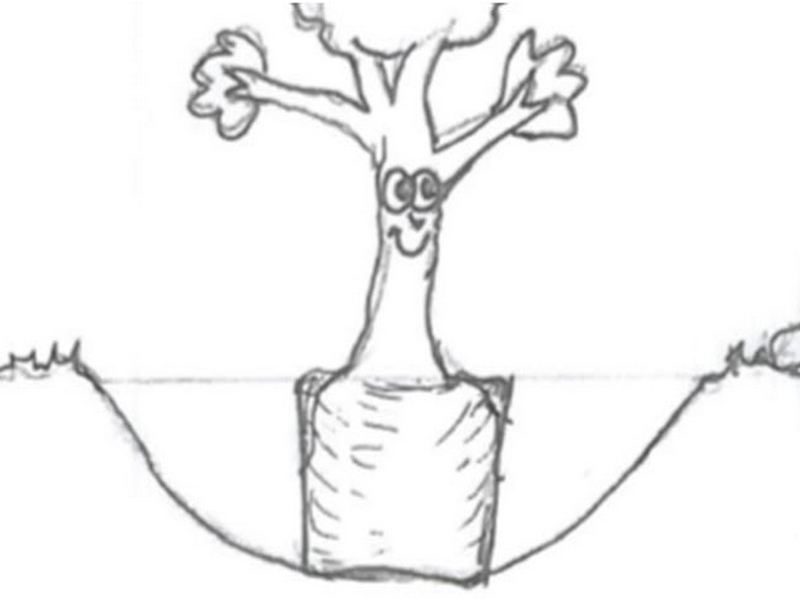 800x600 Tree Planting Tips