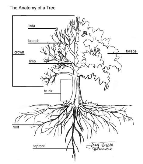 tree roots drawing at getdrawings com