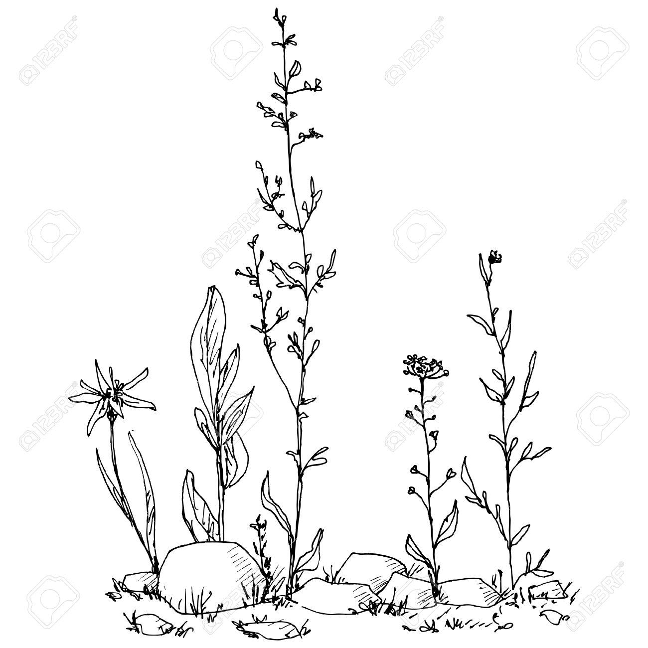 1300x1300 42237087 Composici N Floral Con Hierbas Para Dibujar Con Tinta
