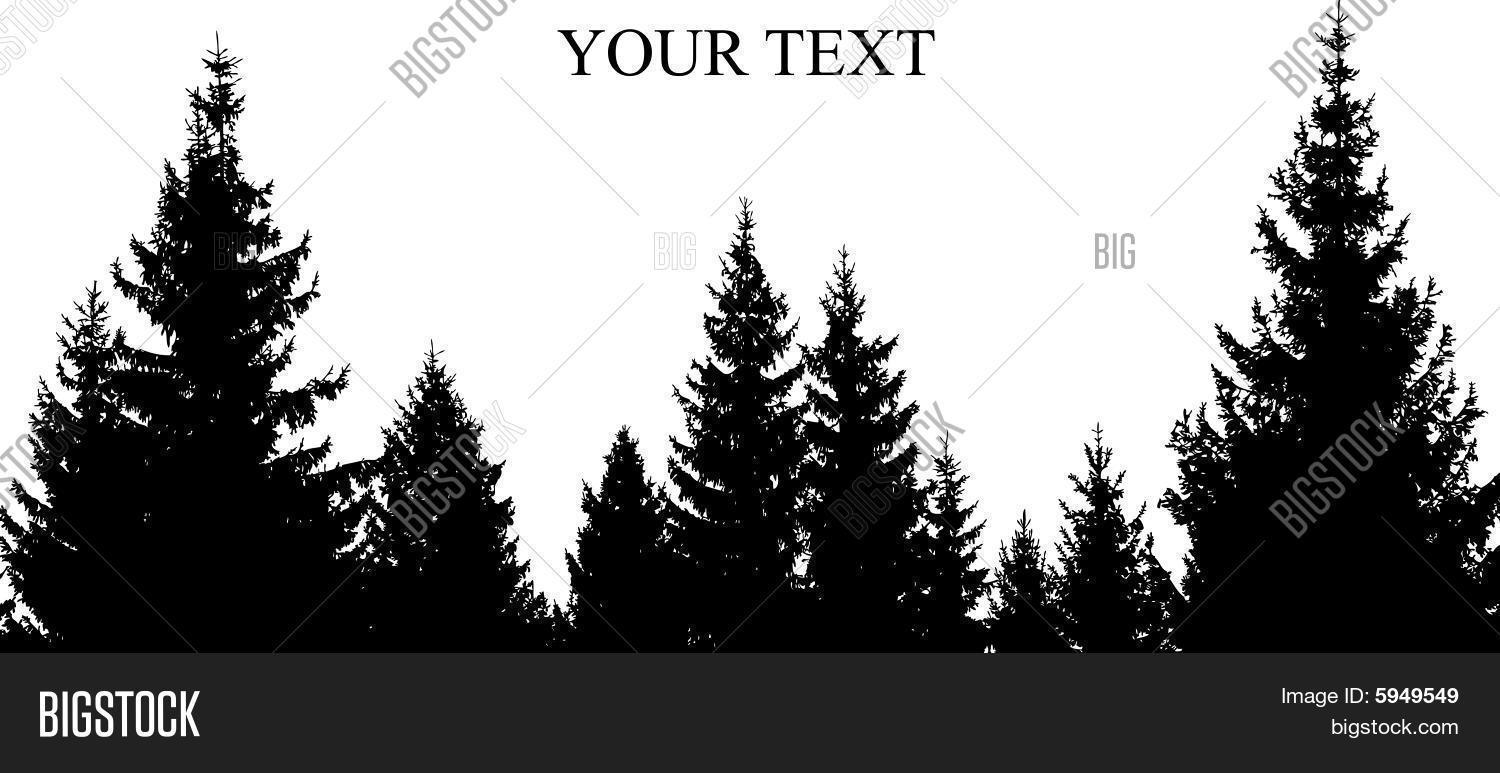1500x773 Pine Tree Silhouette Images, Illustrations, Vectors