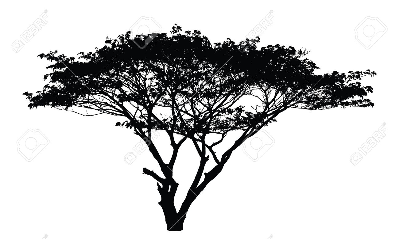 1300x780 Rain Tree Silhouette Vector Royalty Free Cliparts, Vectors, And