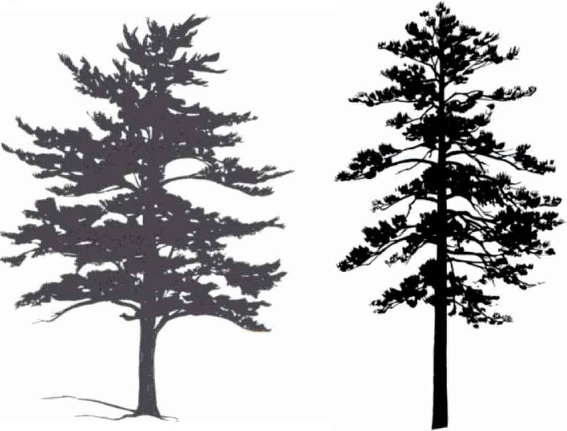 1121x852 Tree Silhouettes