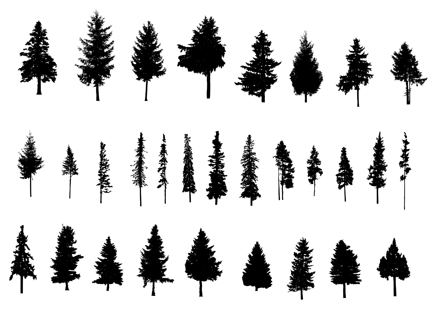 1500x1062 30 Pine Tree Silhouette (PNG Transparent) Vol. 2