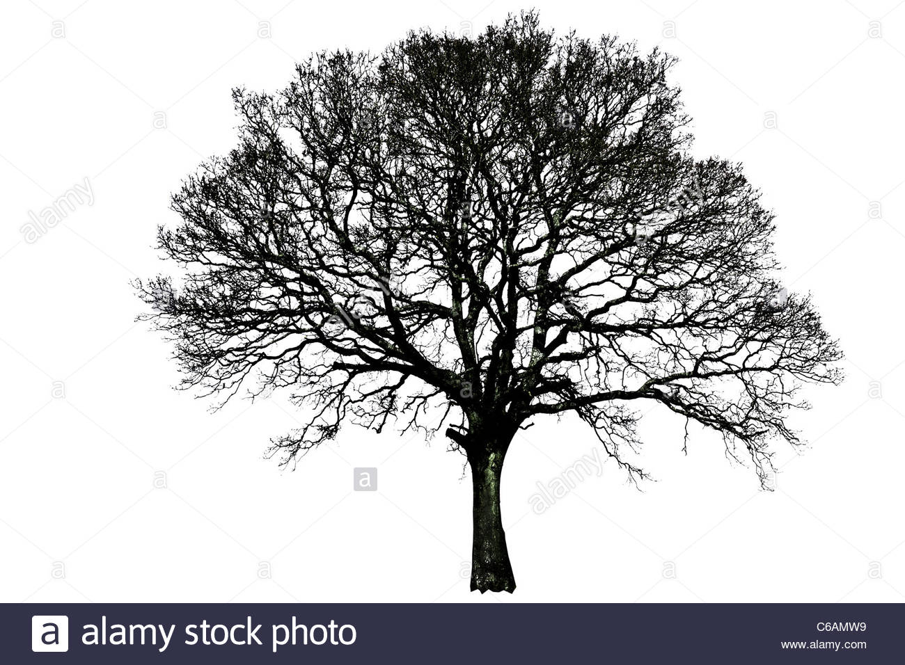 1300x956 Tree silhouette single black and white line isolated remote alone