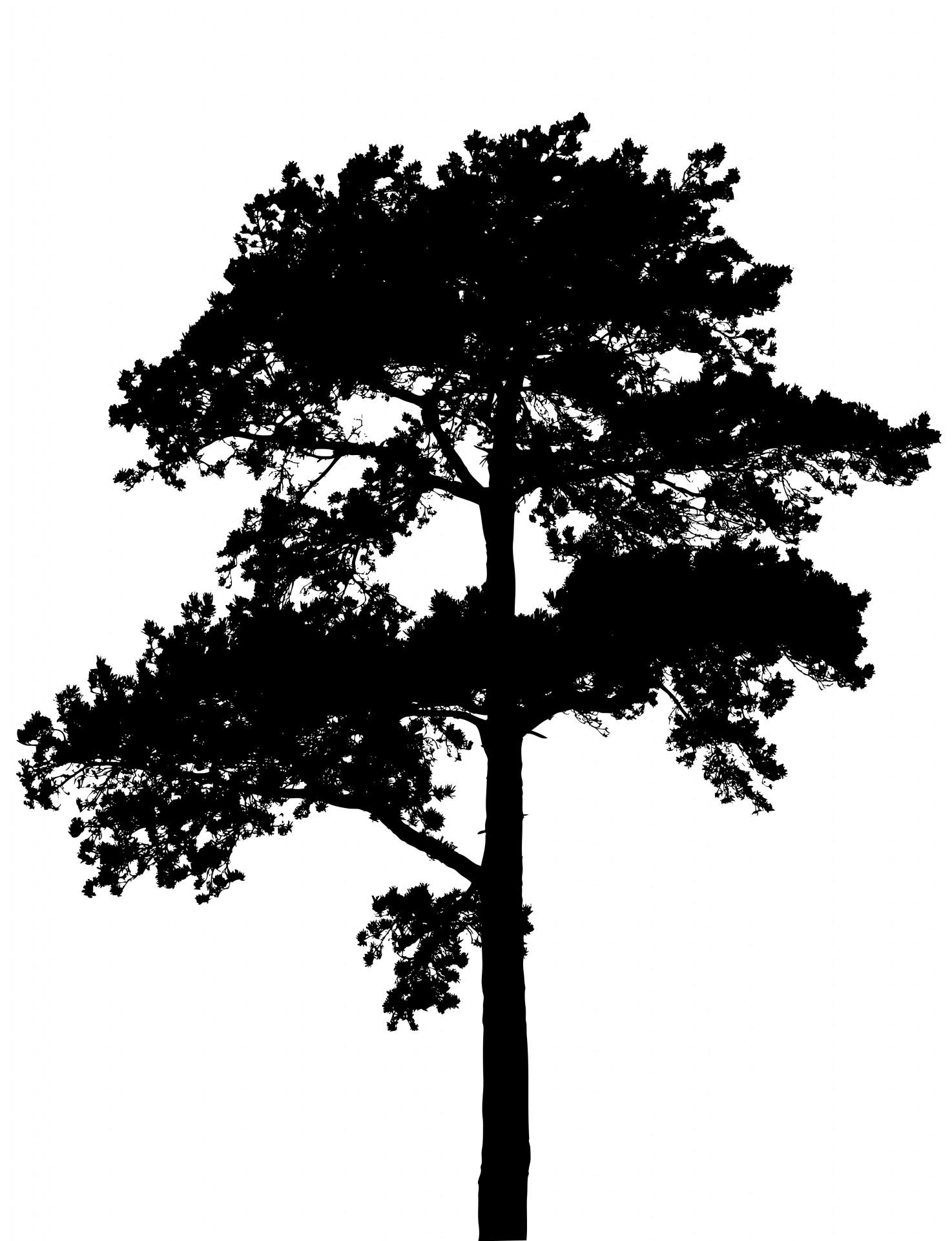 1474x1920 Tree Silhouette