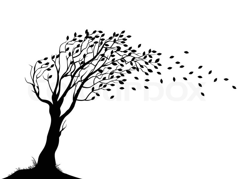 800x600 Autumn tree silhouette Stock Vector Colourbox