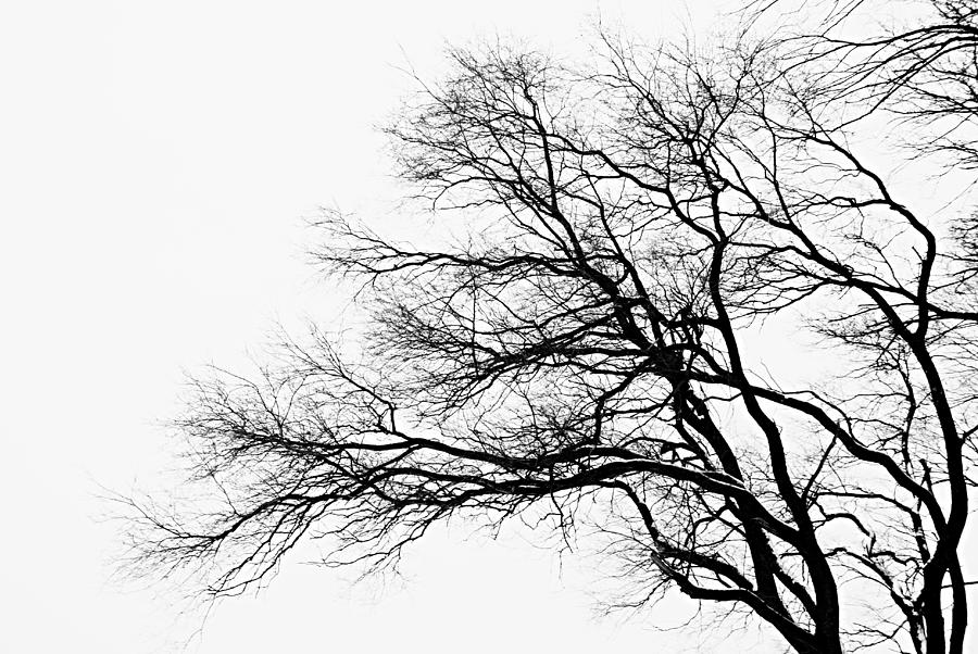 900x602 Bare Tree Silhouette Photograph by Larry Ricker
