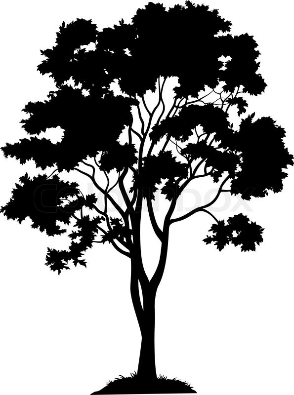 595x800 Maple Tree With Leaves And Grass, Black Silhouette On White