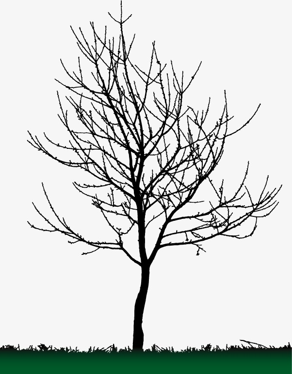 602x769 Tree Silhouette, Tall Tree, Black, Sketch Png And Vector For Free