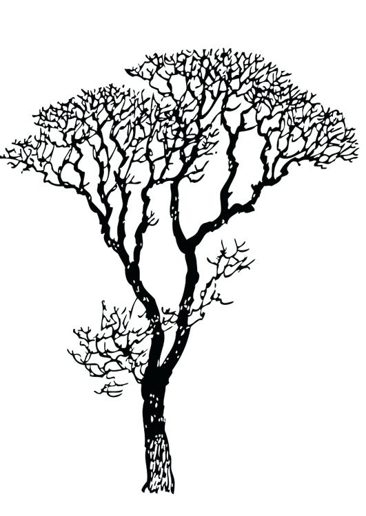 531x750 Bare Tree Coloring Page Coloring Page Bare Tree Bare Tree Trunk