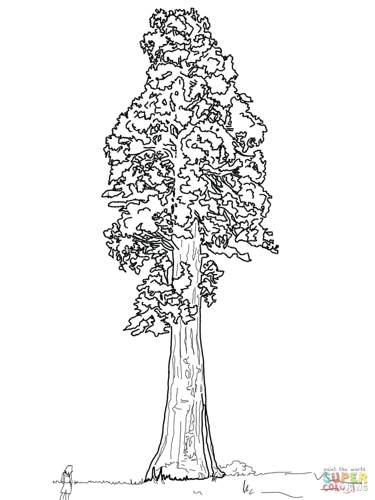 image regarding Printable Tree Trunk identify Tree Trunk Line Drawing at  Free of charge for