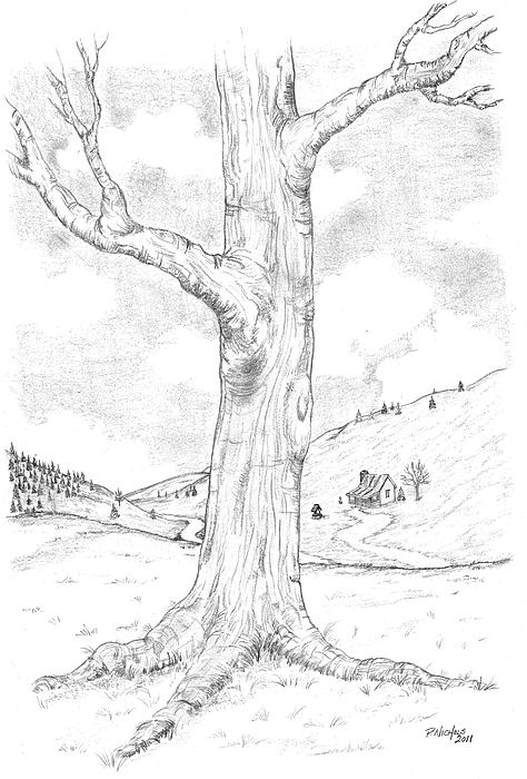 474x700 Pencil Sketch Tree Canvas Print Canvas Art By Paul Nichols