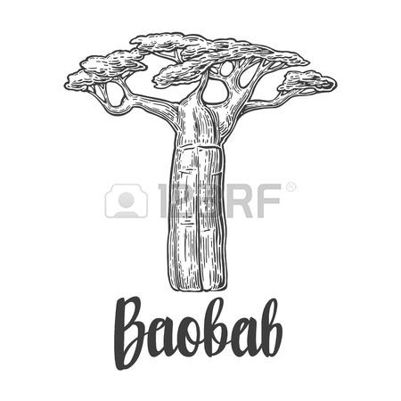 450x450 Baobab Tree. Vector Vintage Engraved Illustration On White