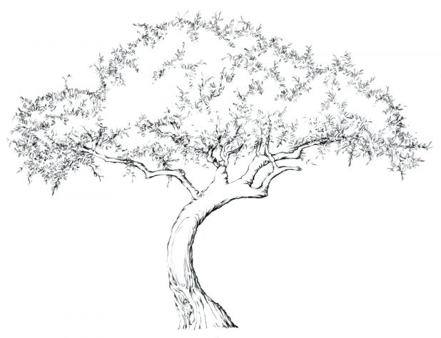 618x474 Coloring Terrific Tree With Branches Outline. Tree Branches