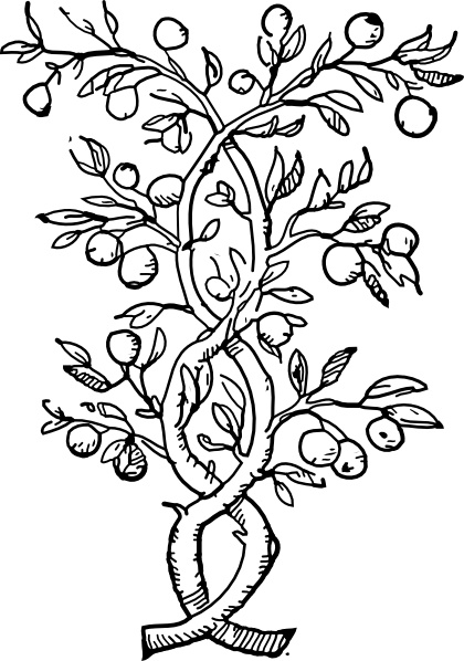 420x598 Fruit Tree Branches Clip Art Free Vector In Open Office Drawing