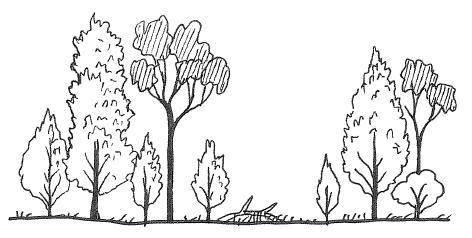 472x238 How To Draw A Forest (Part 1) Or Seeing The Wood For The Trees