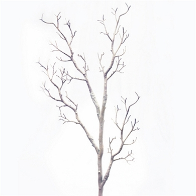 390x390 Manzanita Trees And Individual Branches For Wedding Centerpieces