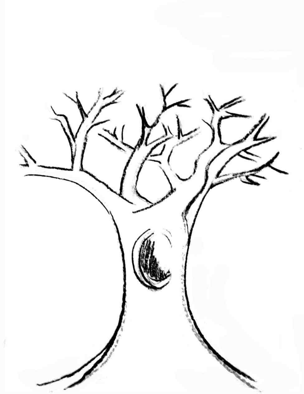 976x1264 Tree Branches Drawing Color