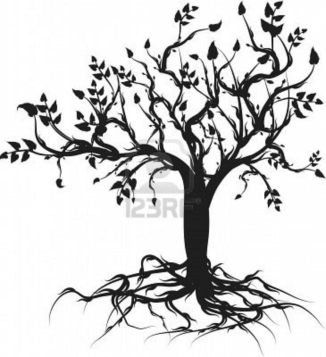 1095x1200 Drawn Roots Cherry Blossom Tree